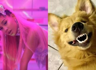 """Cachorro viciado em Ariana Grande viraliza ao reagir ao clipe de """"7 Rings"""""""